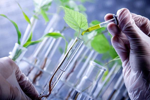 اجرای 160 طرح تحقیقاتی در بخش کشاورزی آذربایجان غربی