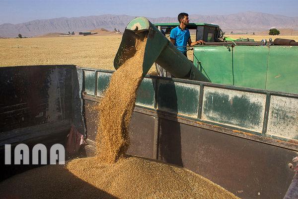 تامین امنیت اقتصادی کشاورزان با افزایش نرخ خرید تضمینی گندم