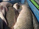 صادرات ۲۵ تن ماهی گرمابی پرورشی از گلپایگان به کردستان عراق