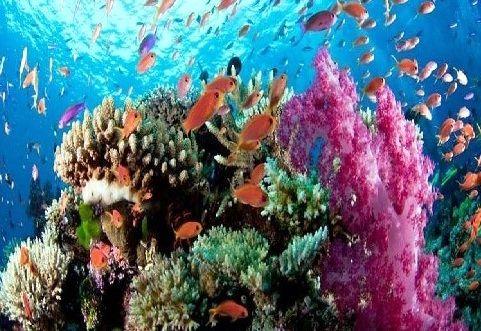 نخستین همایش بینالمللی اقیانوس شناسی غرب آسیا 8 آبان برگزار میشود