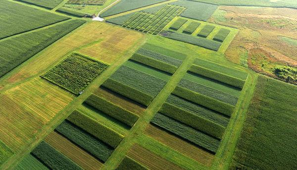 اجرای الگوی کشت بهینه محصولات کشاورزی