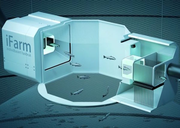 دستگاهی برای شناسایی بیماری آبزیان ساخته شد