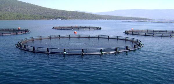 استفاده از گونه های بومی برای پرورش ماهی در قفس