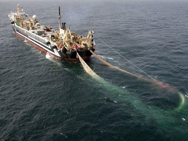 صید ۱۶۵ هزار تن آبزی به روش صید ترال/ پرورش ماهی خاویاری در 21 استان کشور