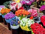 صادرات  40 میلیون دلاری گل و گیاهان زینتی ایران