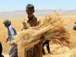 برداشت محصول و افزایش مشکلات گندمکاران؛ دیمکاران کردستانی حمایت شوند