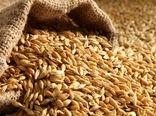 آغاز خرید تضمینی گندم در همدان