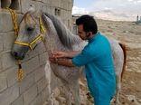 اسبهای لارستان تحت پایش مشمشه قرار گرفتند