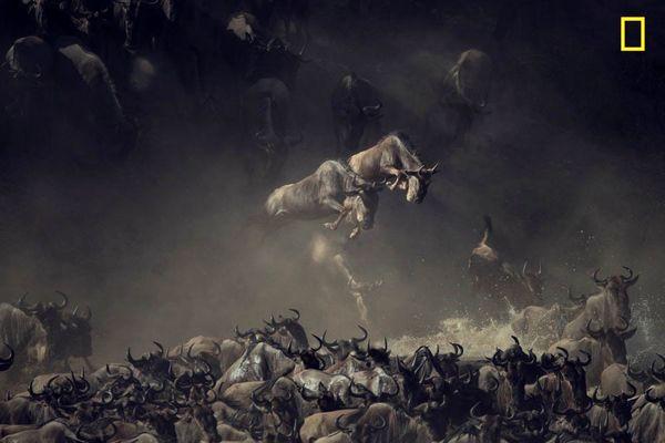 حیاتوحش در رود مارای تانزانیا