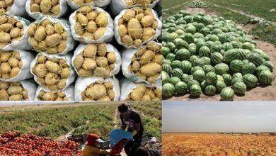 ۲۳۱ میلیون دلار محصولات کشاورزی از کردستان صادر شد