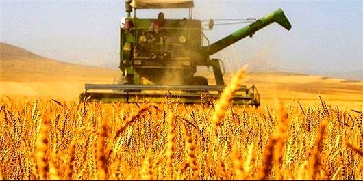 خرید گندم از کشاورزان چهارمحال و بختیاری از مرز 14 هزار تن گذشت