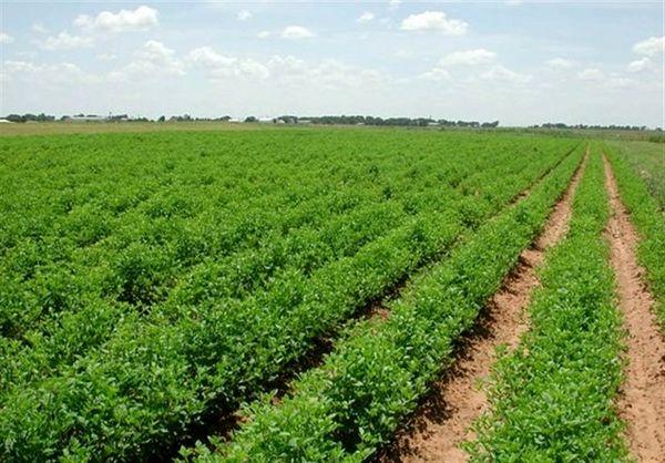 همایش فرصتهای سرمایهگذاری در بخش کشاورزی آذربایجان غربی برگزار می شود