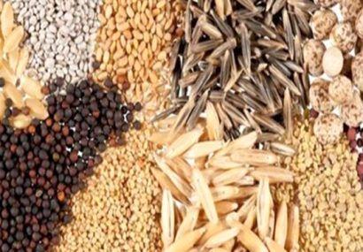 قیمت انواع بذر برای سال زراعی پیش رو در استان آذربایجان شرقی اعلام شد