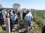 باغداران شهرستان تاکستان با آموزش صحیح هرس باغ های انگورآشنا شدند
