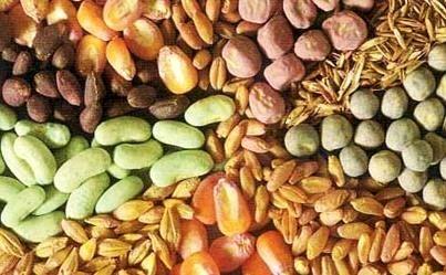 چشم انداز برنامه تولید و تدارک انواع بذور محصولات زراعی تا افق 1404