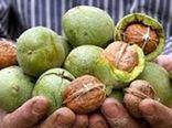 تولید سالانه بیش از 3500 تن گردو در شهرستان خلخال