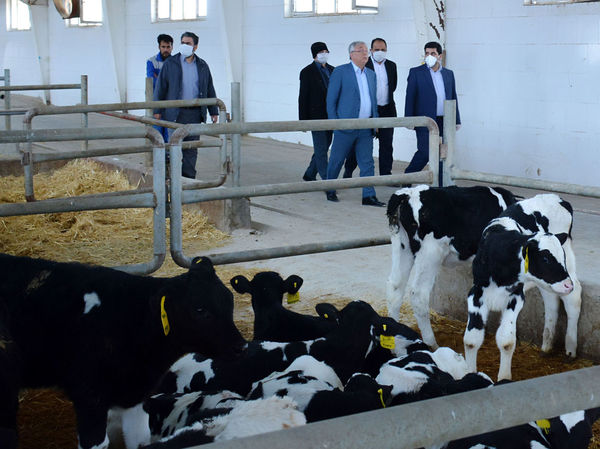 جهش تولید در بخش کشاورزی با تسهیل در سرمایه گذاری محقق میشود