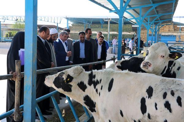 آغاز عملیات اجرایی مجتمع گاو شیری با 3100 راس گاو مولد
