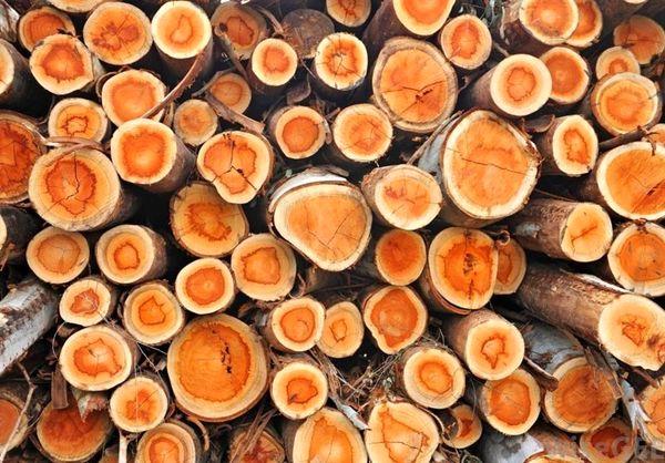 بسته حمایتی از زراعت چوب در راه است