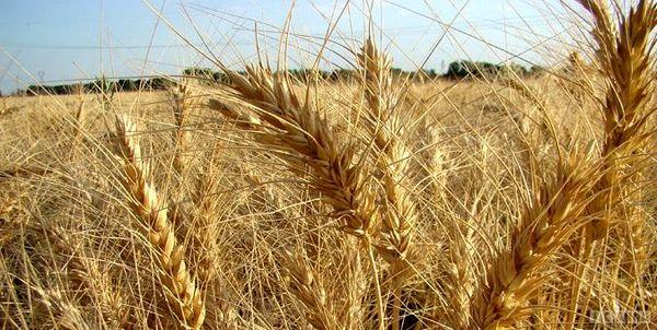 پیش بینی برداشت ۱۱۰ هزار تن جو و گندم در اسدآباد