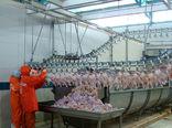 25 میلیون تن گوشت مرغ در سیستانوبلوچستان تولید شد