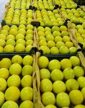 صادرات لیمو شیرین جهرم به اروپا
