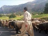 استقرار عشایر استان در مناطق قشلاقی