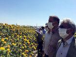 دانه روغنی گلرنگ یکی از بهترین زراعت ها برای اراضی لب شور حاشیه شرقی دریاچه ارومیه است