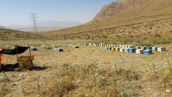 اجرای طرح های زنبورداری بنیاد برکت در شهرستان لردگان