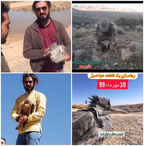 تیمار بیش از 7 جانور وحشی در یک ماه گذشته