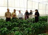 مبارزه بیولوژیک در گلخانه برای اولین بار در فارس