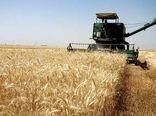 پیش بینی برداشت 45 هزارتن گندم از مزارع شهرستان گیلانغرب
