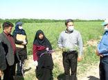 برگزاری دوره آموزش زراعت کلزا (مرحله داشت) توسط مرکز تحقیقات و آموزش کشاورزی آذربایجان شرقی