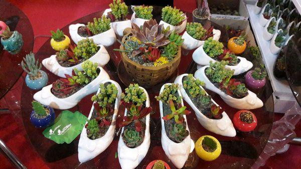 میزبانی محمودآباد از جشنواره گل و گیاه زینتی/ تجهیز و نوسازی 900 هکتار از شالیزارها