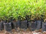 پرداخت یارانه نهال به متقاضیان احداث باغ در داراب