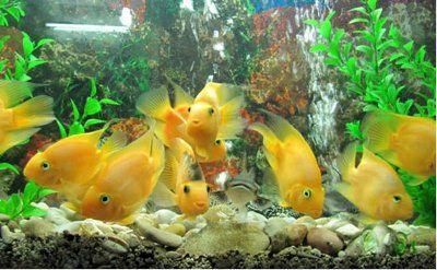 افزایش دو برابری مراکز پرورش ماهی زینتی در شهرستان پردیس