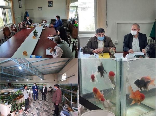تولید بیش از چهار میلیون قطعه ماهی زینتی در شهرستان آذرشهر