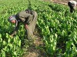 سرمایهگذاری عربستان در کشاورزی و بازسازی عراق