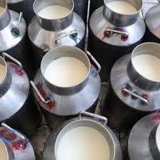 متوسط تولید سالانه بیش از 14 هزار تن شیر