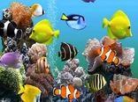 تولید 250 میلیون قطعه ماهی زینتی در کشور