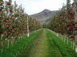 اصلاح، احیا و جایگزینی 441 هکتاراز باغات آذربایجان غربی