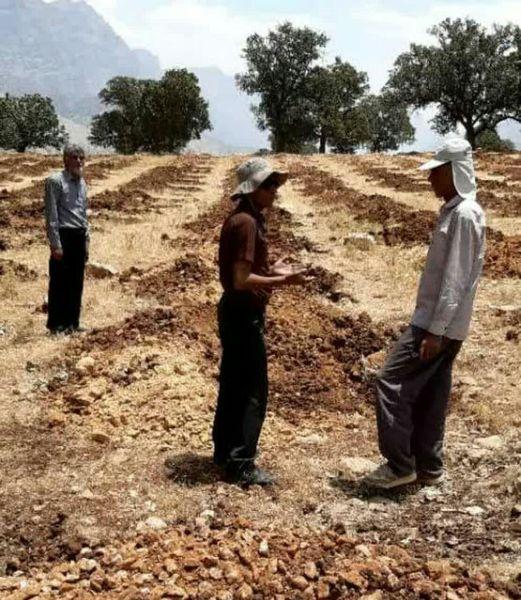 توسعه باغات دیم در اراضی شیبدار فرصتی برای ایجاد اشتغال