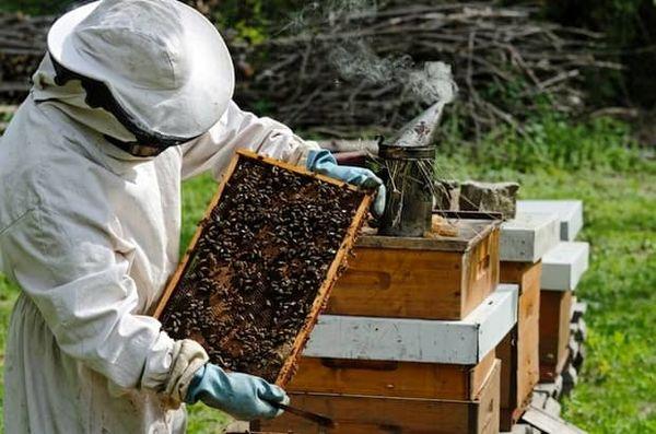 بیش از ۶۰۰تن عسل در چالدران تولید می شود