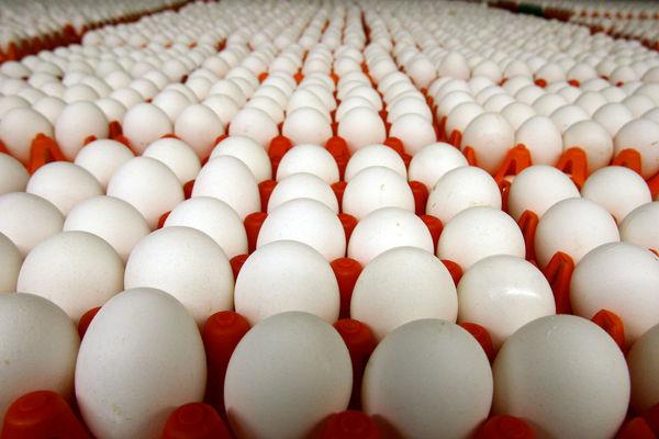 صادرات 10 درصد تخم مرغ مازاد بر نیاز به افغانستان و عراق