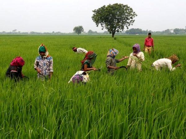 صادرات غیررقابتی محصولات کشاورزی هند در سطح جهان/صادرات هند 9 میلیارد دلار کاهش یافت
