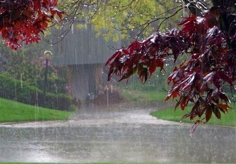 بارش باران، رعد و برق و وزش باد شدید در برخی استانها