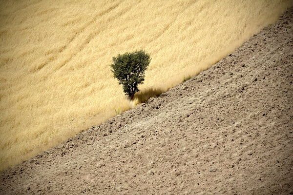 کشت بیش از 19 هزار هکتار گندم در مزارع شهرستان نمین