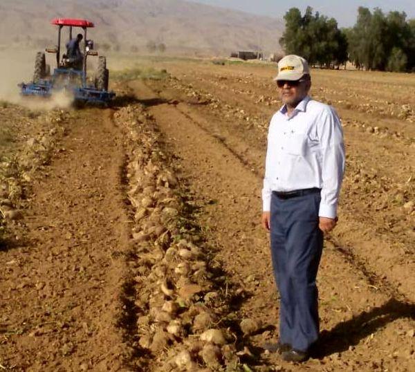 برداشت چغندر قند پاییزه برای اولین بار در فسا