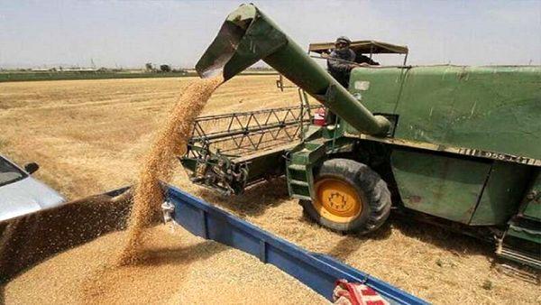 امسال ۲۲۵ هزار تن گندم در بیجار برداشت شد