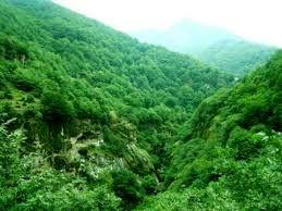 ثبت جهانی جنگل های هیرکانی تاکیدی بر اهمیت اجرای طرح تنفس